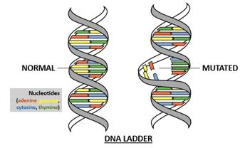 DNA ladders: normal vs mutated
