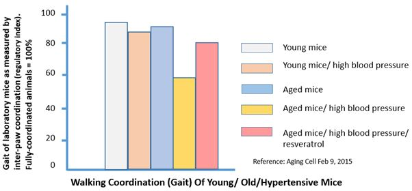 Chart: Walking coordination ( Gait ) of young / old / hypertensive mice