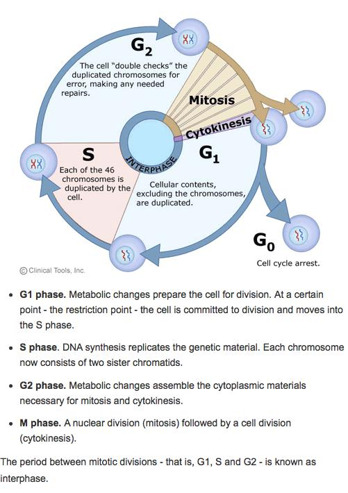 Cell Cycle Arrest