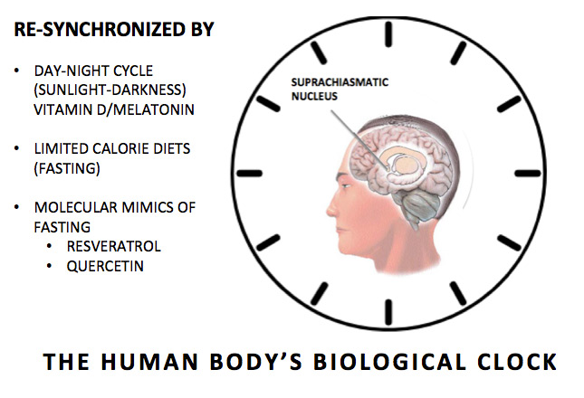 Human's body biological clock