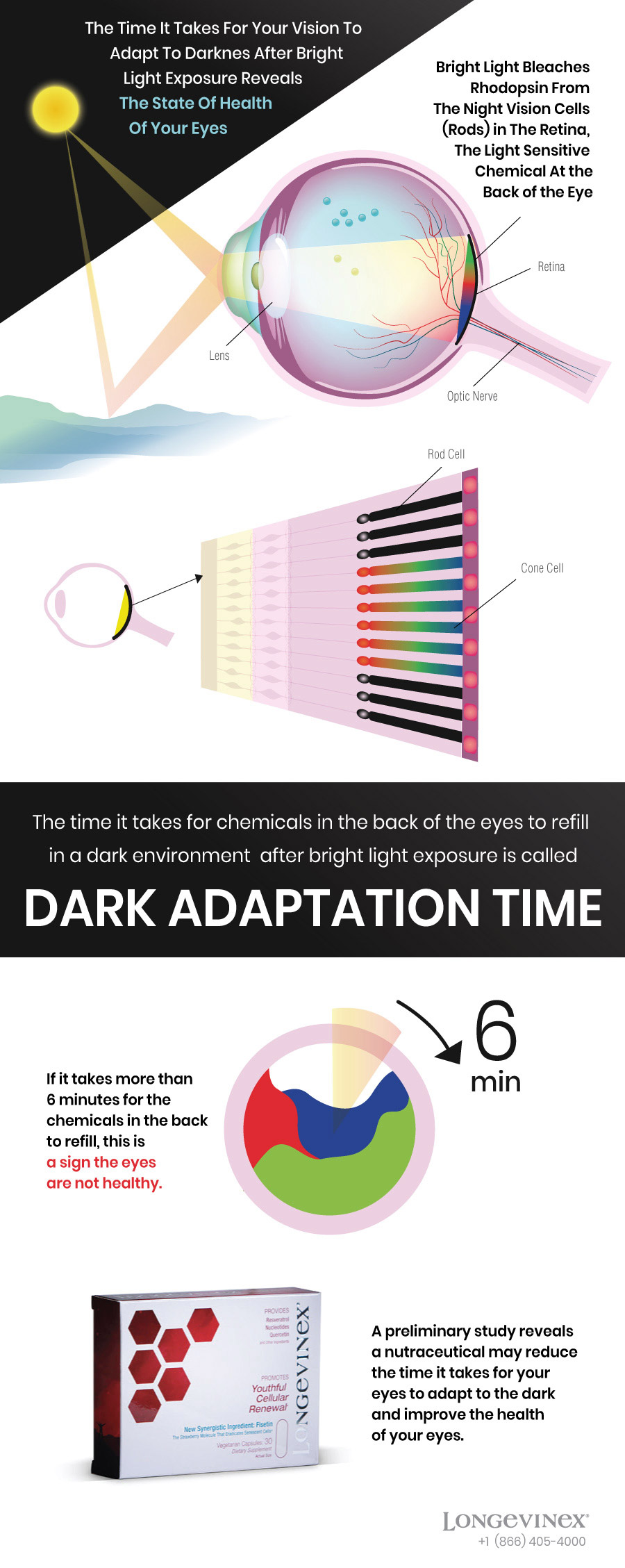 Infographics: Dark adaptation