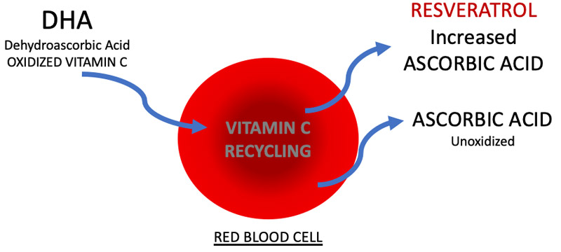 Vitamin C recycling