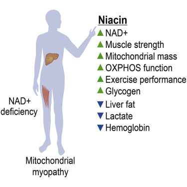 NADplus deficiency
